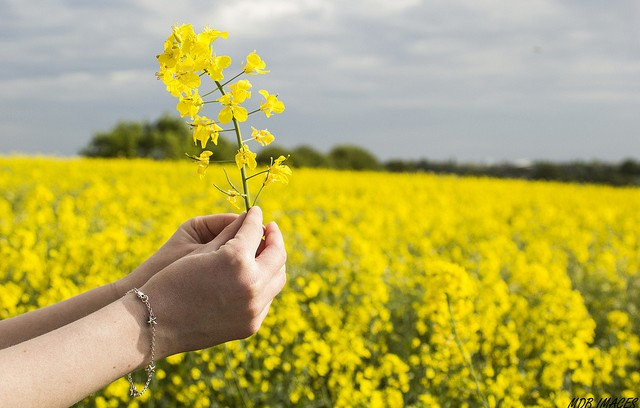 socially responsible investing - field of flowers